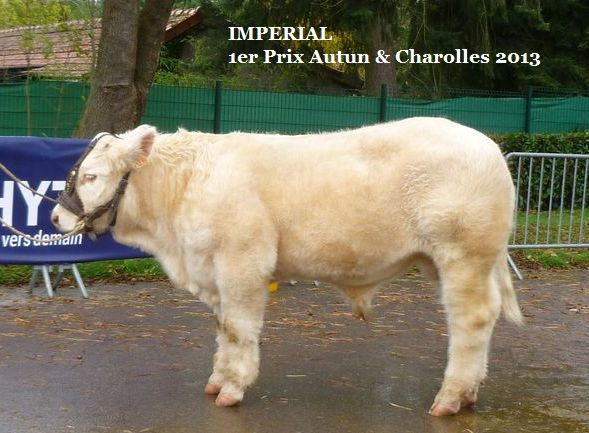 a imperial 1